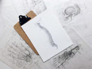 spine anatomy sketch